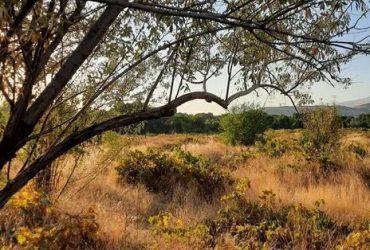 فروش زمین انگور ۴۲۰ متری در کوهسار خوروین