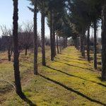 خرید زمین 1000 متری در کوهسار