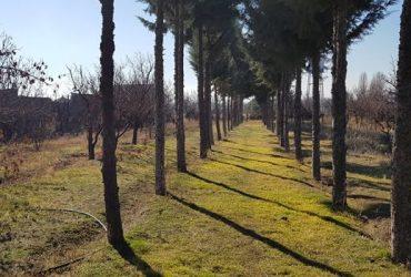 خرید زمین ۱۰۰۰ متری در کوهسار